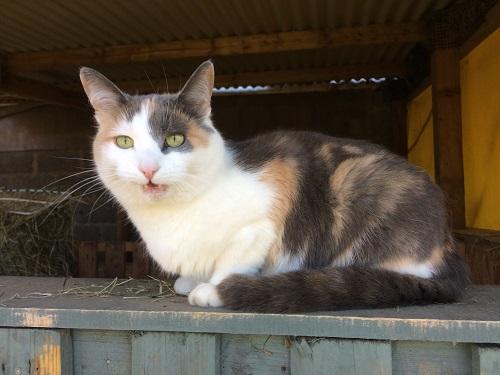 Calico cat client of Allium healing