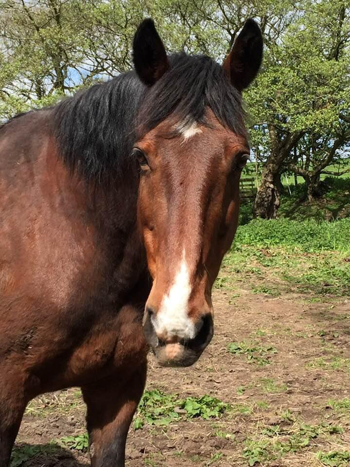 Horse helped by Allium Healing