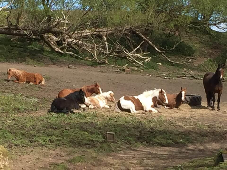 Herd of horses dozing in the sun - Allium Healing clients
