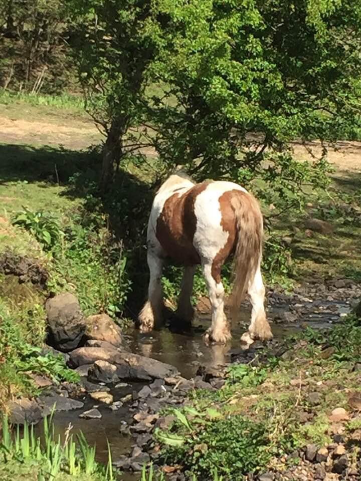 Nice bum - equine client Allium Healing homeopathy