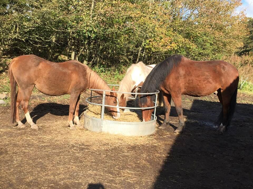 Happy horses helped by Allium Healing