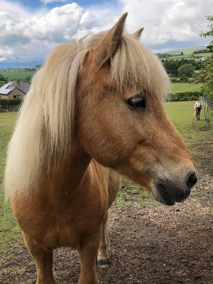 Allium healing has helped this pony with homeopathy & kinesiology