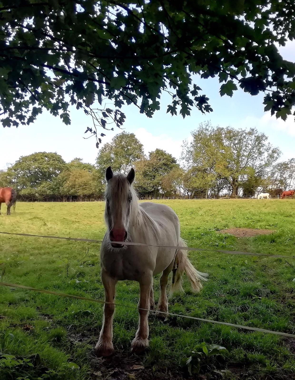 Allium Healing equine client